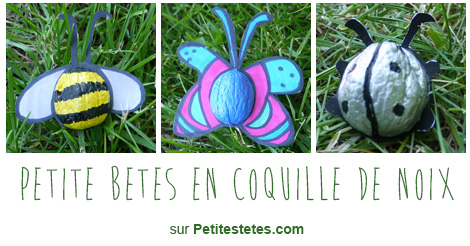 petites-betes-coquille-noix2